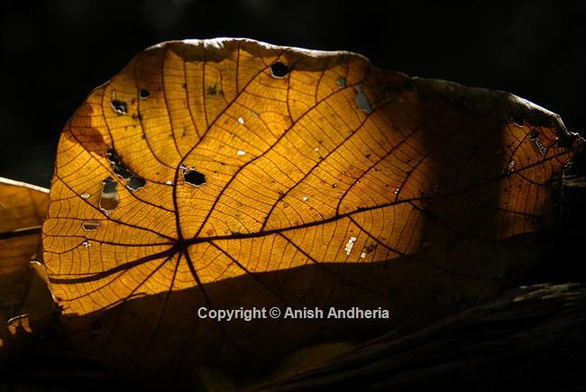 Back-lit leaves make extraordinary subjects